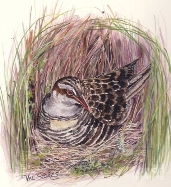 Painting - Banded Rail by Val Stokes