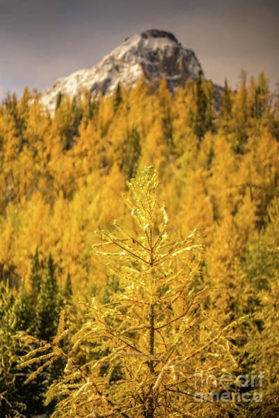 Wall Art - Photograph - Banff Golden Larch Dream World by Mike Reid