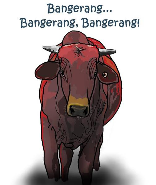 Drawing - Bangerang by Joan Stratton
