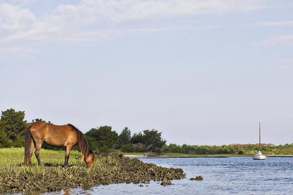 Banker Horse Along Taylors Creek Art Print
