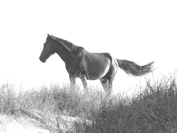 Photograph - Banker Horse On Dune  1 by Jeffrey Peterson