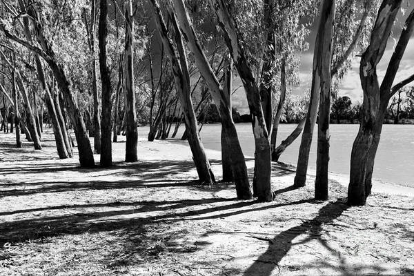 South Bank Photograph - Banks Of The Murray River by Bill  Robinson