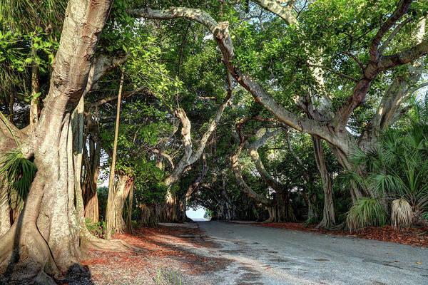 Boca Grande Photograph - Banyan Street by Donna Kennedy