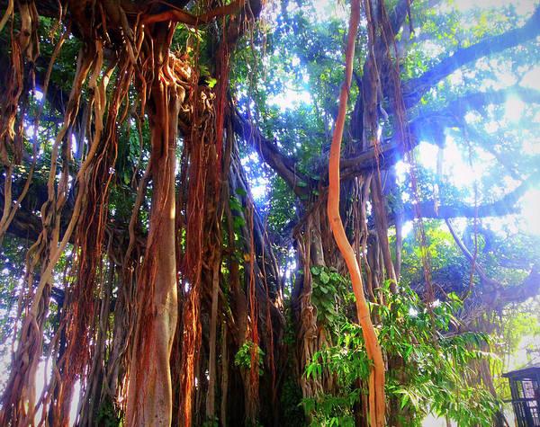 Photograph - Banyan Tree by Atullya N Srivastava