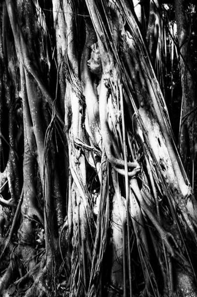 Photograph - Banyan Tree Boy 2 by Mick Burkey