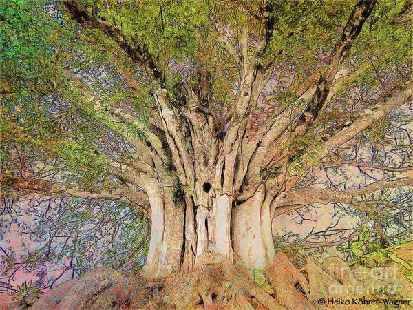 Wall Art - Photograph - Banyan Tree by Heiko Koehrer-Wagner