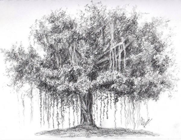 Singh Drawing - Banyan Tree by Swati Singh