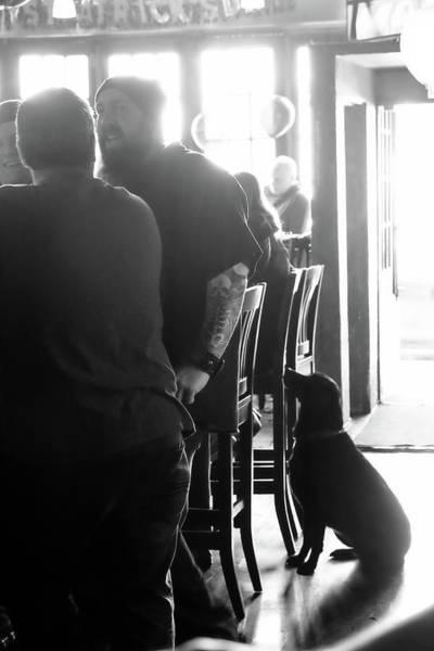 Photograph - Bar Dog by John McArthur