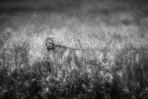 Photograph - Barb Wire Fence by Bill Wakeley