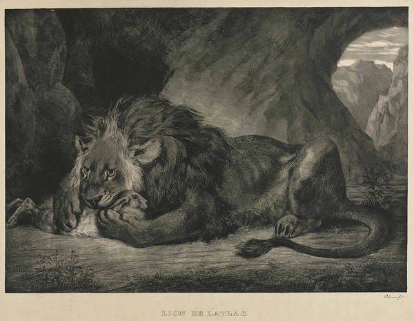 Mountain Lion Painting - Barbary Lion by Eugene Delacroix