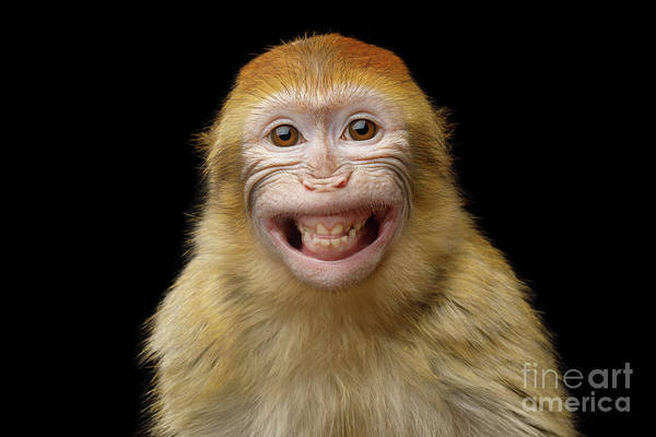 Photograph - Barbary Macaque Smiling by Sergey Taran
