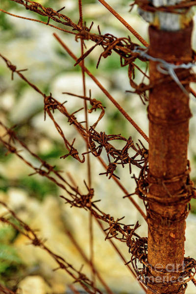 Photograph - Barbed Wire Fence Closeup by Global Light Photography - Nicole Leffer