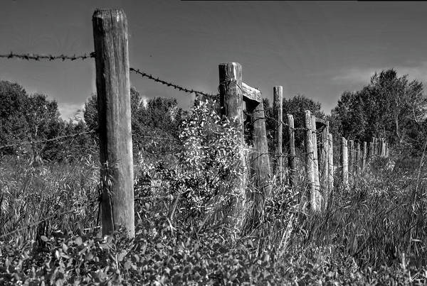 Photograph - Barbed Wire by Philip Rispin