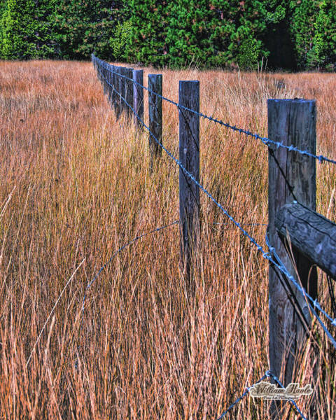 Photograph - Barbwire In The Grass by William Havle