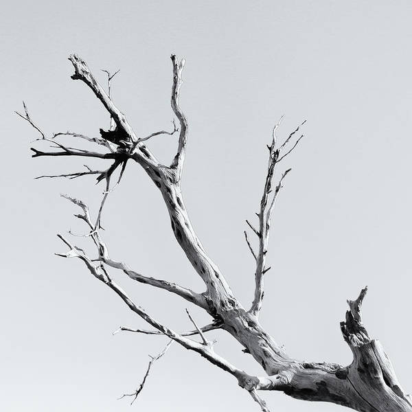 Photograph - Bare Branches by Nicholas Blackwell