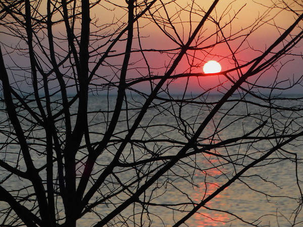 Photograph - Bare Branches Sunset by David T Wilkinson