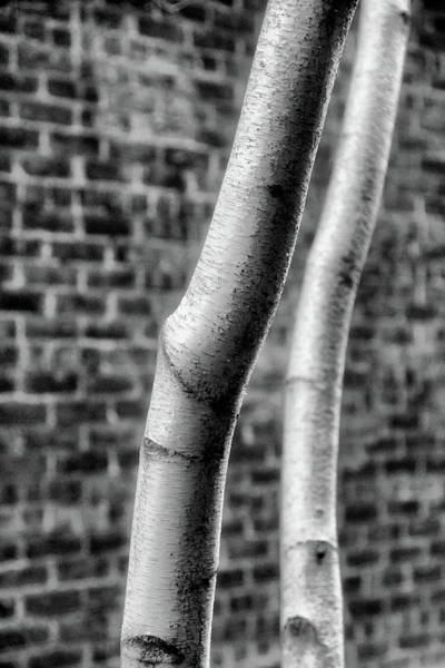 Photograph - Bare Limbs by Cate Franklyn