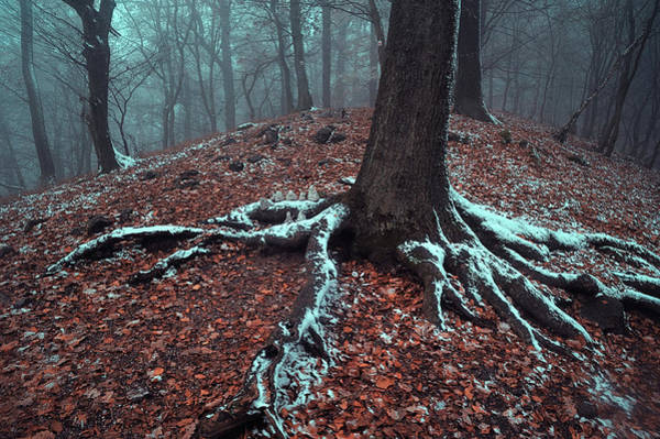 Photograph - Bare Roots by Jenny Rainbow