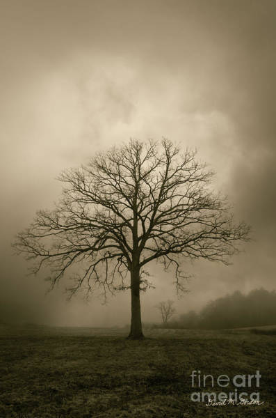 Photograph - Bare Tree And Clouds  by Dave Gordon