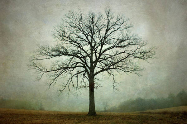 Photograph - Bare Tree And Fog by Dave Gordon