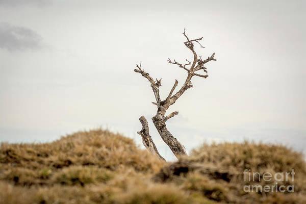 Wall Art - Photograph - Bare Tree by Bernard Jaubert