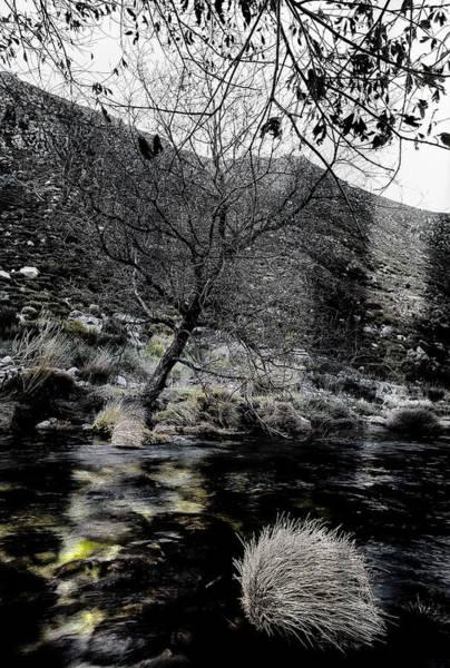 Photograph - Bare Tree by Edgar Laureano