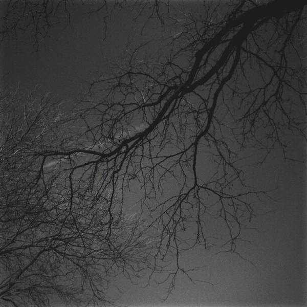 Photograph - Bare #tree Limbs In #chicago #mylife by Tammy Winand