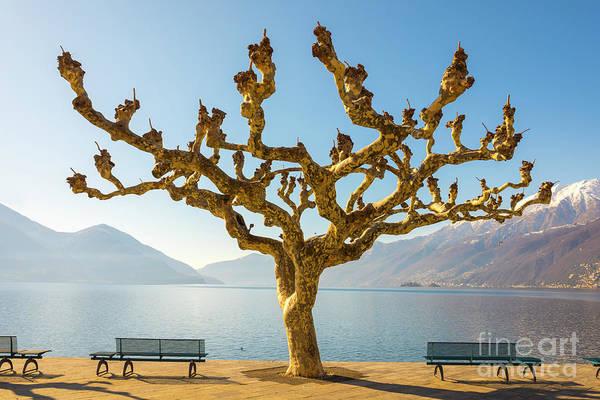 Photograph - Bare Tree by Mats Silvan