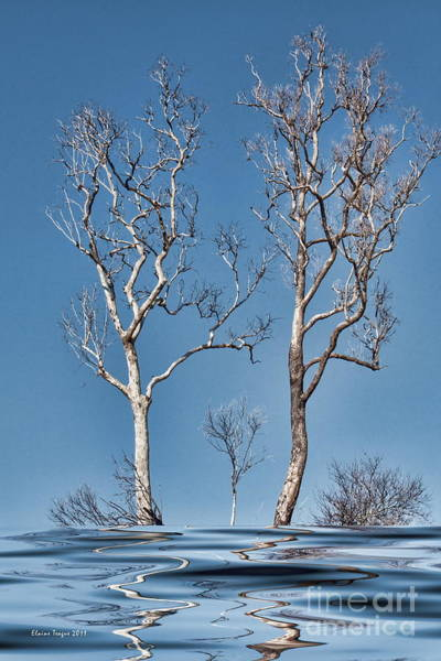 Photograph - Bare Tree Reflections by Elaine Teague