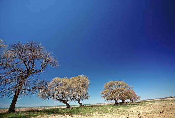 Fence Post Digital Art - Bare Trees Along Shore Of Lake Manitoba by Mark Duffy
