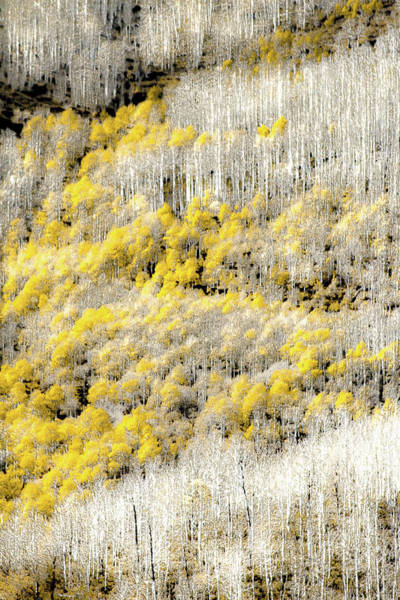 Wall Art - Photograph - Condition Yellow by Terry Walsh