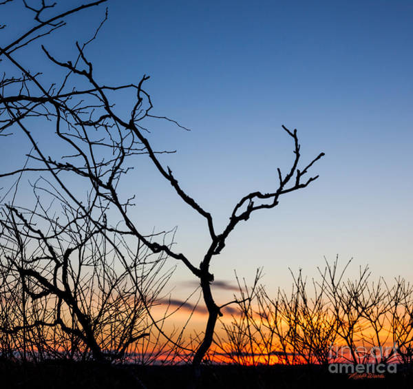 Photograph - Bare Trees At Sunset by Michelle Constantine