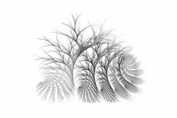Digital Art - Bare Trees Daylight by Doug Morgan