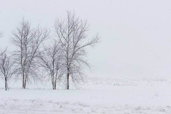 Photograph - Bare Trees In A Snow Storm by Pete Hendley