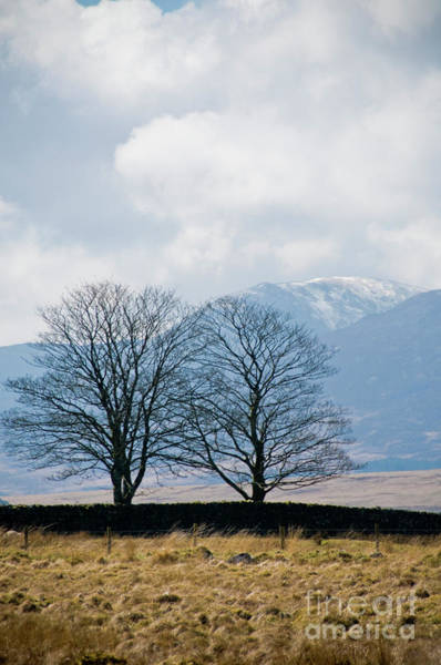 Photograph - Bare Trees In Winter by Keith Morris