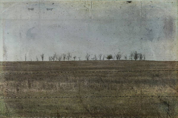 Wire Wrap Photograph - Bare Trees To The West by Toni Hopper