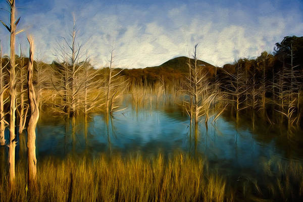Wall Art - Photograph - Bare Waters by Lana Trussell