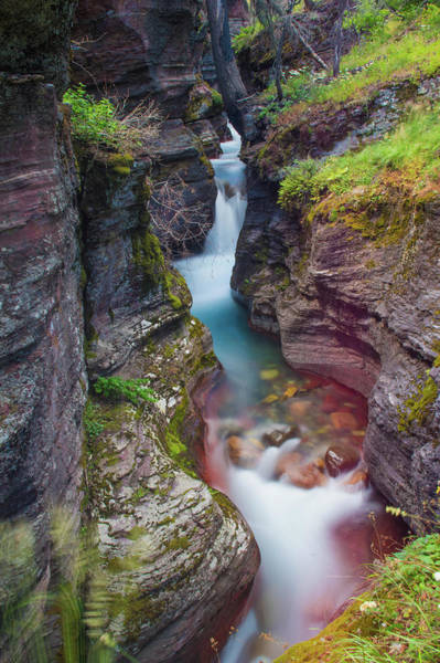 Photograph - Baring Creek Gorge by Jedediah Hohf