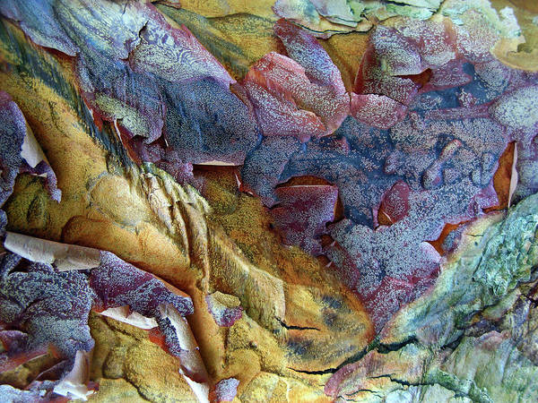 Photograph - Bark Abstract by Jessica Jenney