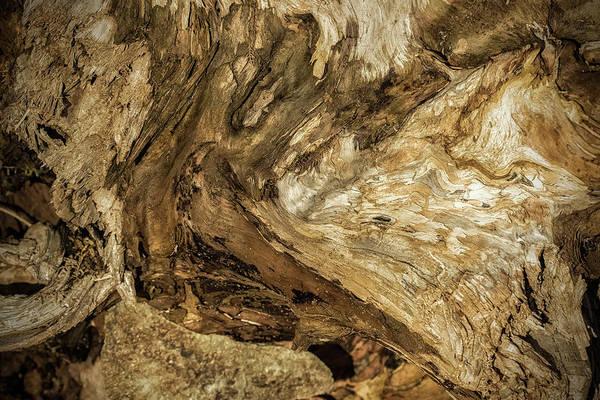 Photograph - Bark Abstract, No. 1 by Belinda Greb