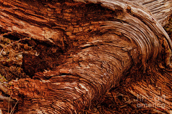 Photograph - Bark Art Swirls by Blake Richards