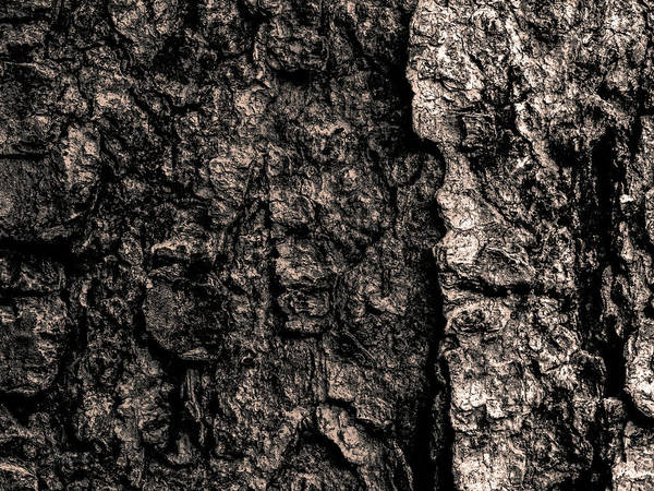 Photograph - Bark by Bob Orsillo
