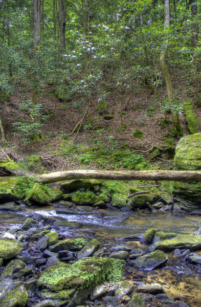 Photograph - Bark Camp Creek 28 by Sam Davis Johnson