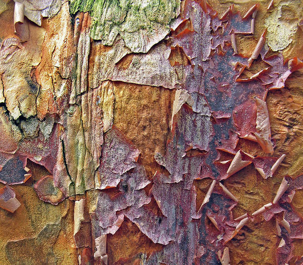 Peeling Photograph - Nature By Design by Jessica Jenney