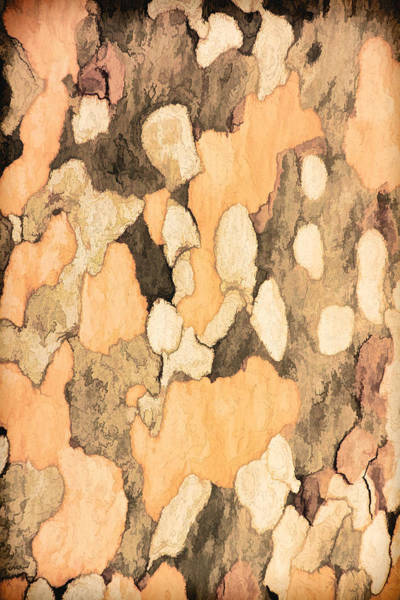 Photograph - Bark Of A Sycamore Pnt by Theo O'Connor