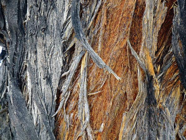 Photograph - Bark Of Palm by Lynda Lehmann