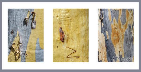 Photograph - Bark Triptych Gd1 by Werner Padarin