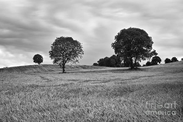 Wall Art - Photograph - Barley Field by William Cleary