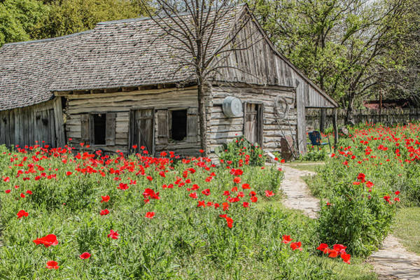 Photograph - Barn And Castro Poppies by Teresa Wilson