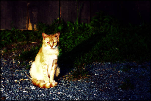 Photograph - Barn Cat by Susie Weaver